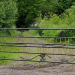 kingmoor gate