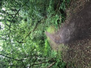 Footpath in Kingmoor North Nature Reserve