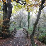 Kingmoor Bridge at Nature Reserve